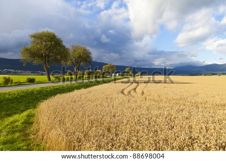 Rye Field in Neuchatel, Switzerland