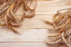 Rye grain. Whole, barley, harvest wheat sprouts. Wheat grain ear or rye spike plant on wooden texture or brown natural cotton background, for cereal bread flour. Rich harvest Concept.