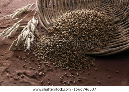 Rye grains (Secale cereale), tipped from a wicker plate on sandstone #1566946507