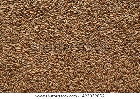 Rye seeds. Background. Rye grain. #1493039852