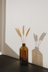 Rye, wheat ear stalks in old-fashioned bottle. Warm sun light shadows on the wall. Minimalistic home interior design decoration concept.