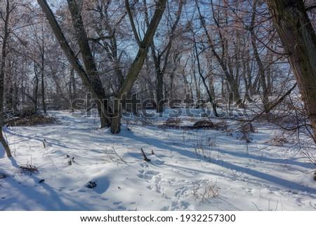 Słoneczny zimowy poranek w lesie Zdjęcia stock ©