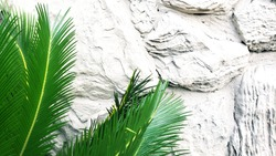 Sabal Palm in the bottom right to the side of a textured off-white rocky wall, perfect for a phone background, pinterest image, or blog post with lots of copy space