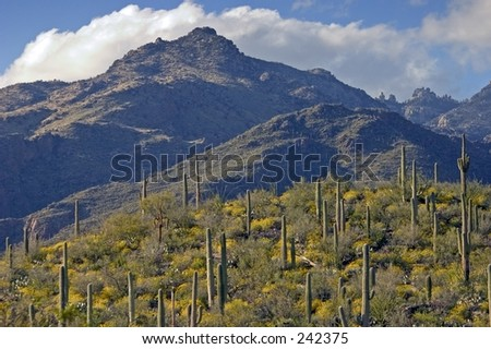 Sabino Canyon Spring.