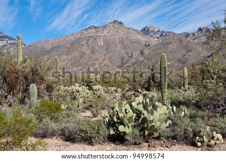 Sabino Canyon Vista in Tucson, Arizona
