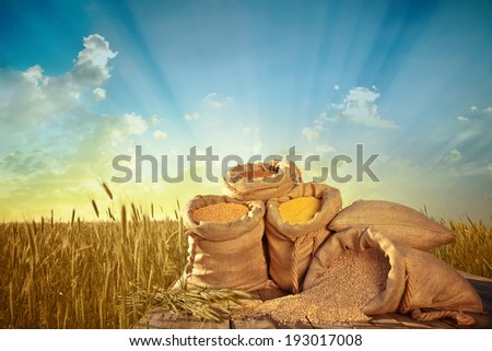 sacks of grain on the background field of ripe wheat