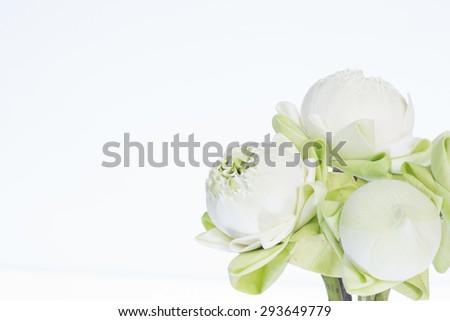 Sacred lotus. #293649779