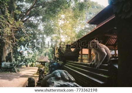 Sacred Monkey Forest Sanctuary, Ubud, Bali  #773362198
