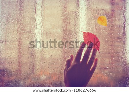 sad autumn background, old hand touches wet window with autumn leaves, rainy weather