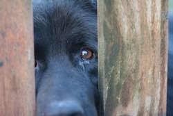Sad black dog eyes between bars. Animal abuse concept.