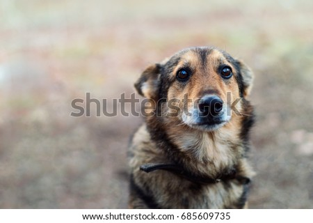 Sad but faithful dog with deep expressive eyes. selective focus