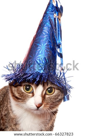 "Sad cat in a festive hat, or ""feast was over"""