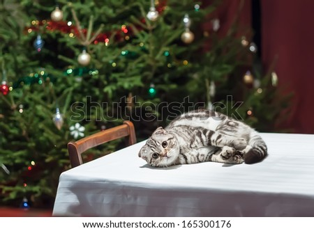 Sad cat lies on an empty celebratory table with Christmas tree in the background in anticipation of Christmas and New Year
