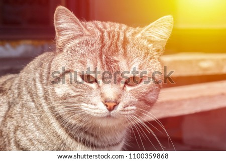 Sad cat on the street, blurred background. Close-up