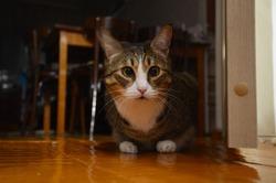 sad cat with slanting eyes