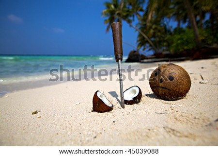 Sad Coconut with slaughtered friend! - stock photo