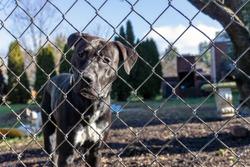 sad dog behind chain link fence