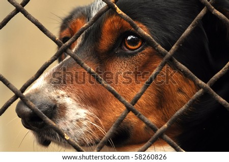 Sad dog behind the fence.