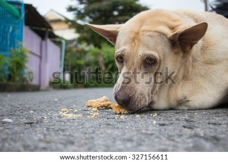 Sad dog in Thailand.  Fat dog sleep in sadness and despair. .Sad dog because it\'s very fat, so the patient and disease.
