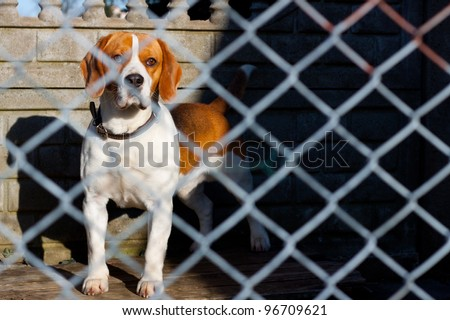 sad dog locked in a cage