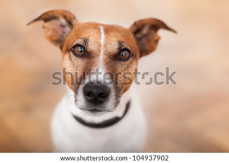 sad dog looking helpless to the camera
