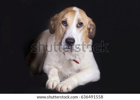 Shutterstock Sad dog portrait