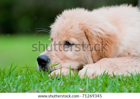 sad dog resting on the grass