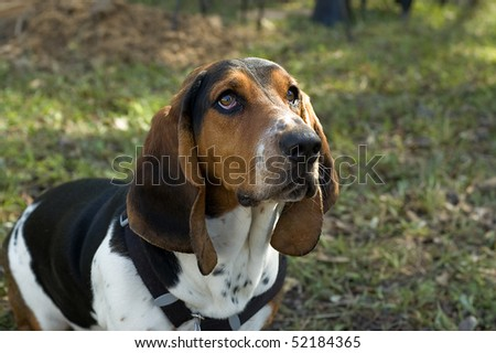 Sad eyed dog