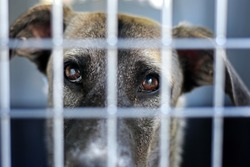 sad eyes of a puppy behind bars close up. a puppy at an animal shelter. High quality photo