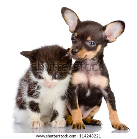 sad kitten and smiling dog. Isolated on a white background
