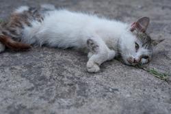 sad little homeless kitten lies on cracked concrete