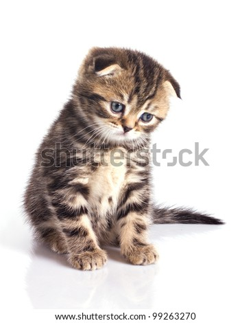 Sad little kitten isolated on white background