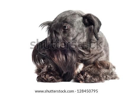 sad looking dog - stock photo