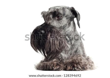 sad looking dog portrait