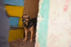 Sad old dog standing in the hall of old house next to the police man guard. Abused dogs in Slovak gypsy village.