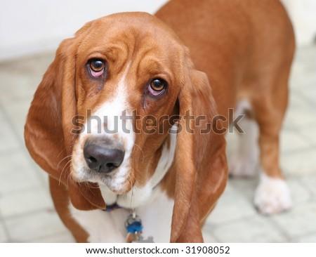 Sad Puppy - stock photo