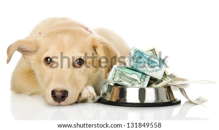 sad puppy needing the help. isolated on white background