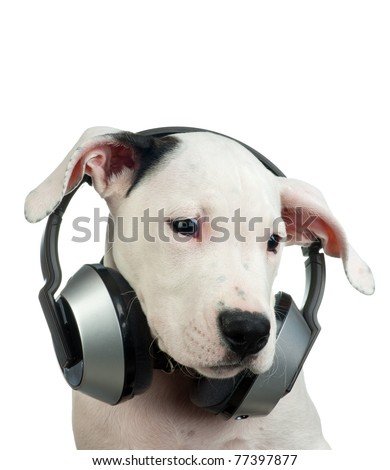 sad puppy with headphones