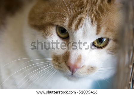 Sad red cat breeds bobtail in a cage at exhibition - stock photo