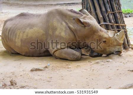 Sad rhino #531931549