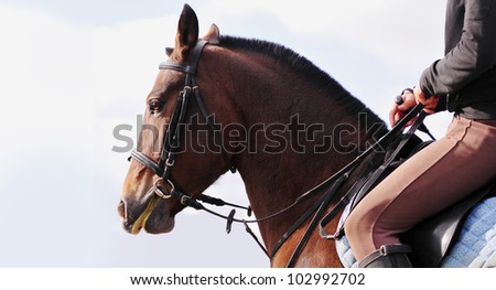 saddle up horse in bridle with sky background behind