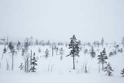 sadness winter landscape. dreary winter tundra