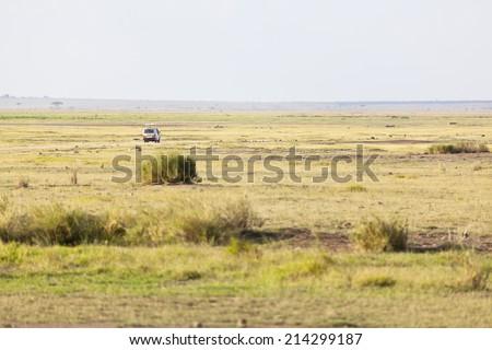 Safari Car in the savanna of Amboseli National Park in Kenya