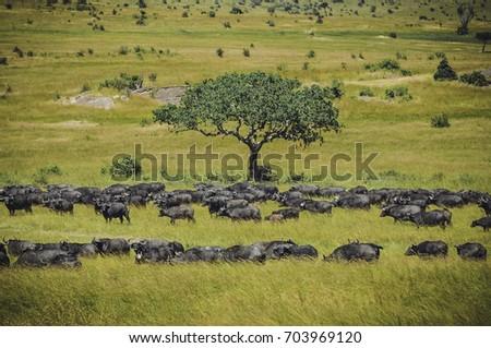 Safari crowd