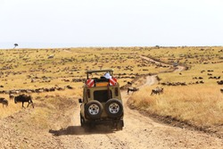 Safari Game Drive during The Great Wildebeest Migration across Northern Tanzania and Kenya