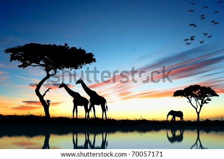 Safari in Africa. Silhouette of wild animals reflection in water. - stock photo