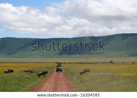 safari wildlife
