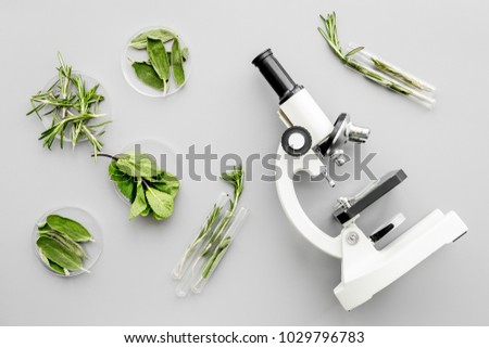 Safety food. Laboratory for food analysis. Greens near microscope on grey background top view
