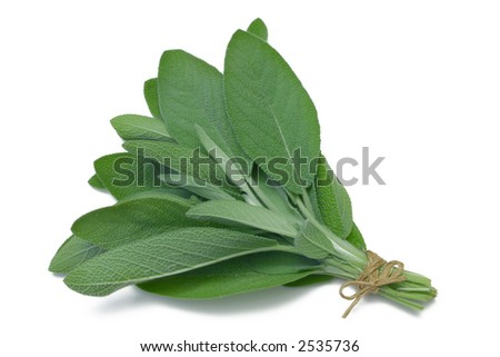 Sage (herb) tied in a bunch with twine, isolated on white