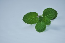 Sage leaf green  is wrinkled, wavy can be extracted for mint oil use in the food industry. And the pharmaceutical industry into a single leaf and in pairs .closeup sage leaf herb isolate white.